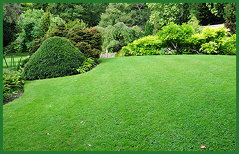 tree and shrub care with green lawn