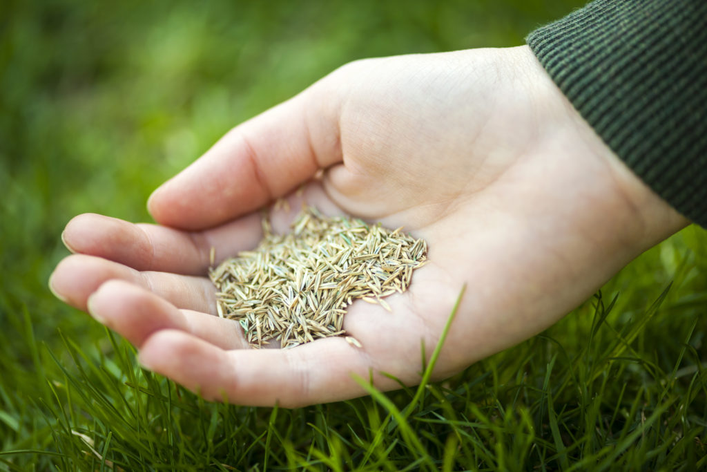 When to seed your lawn...Over Seeding by hand