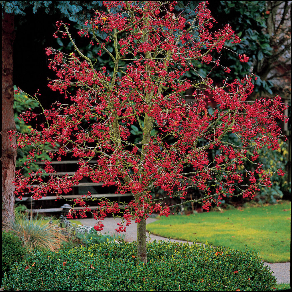 Prepare your lawn for the Fall...Trees and Shrubs