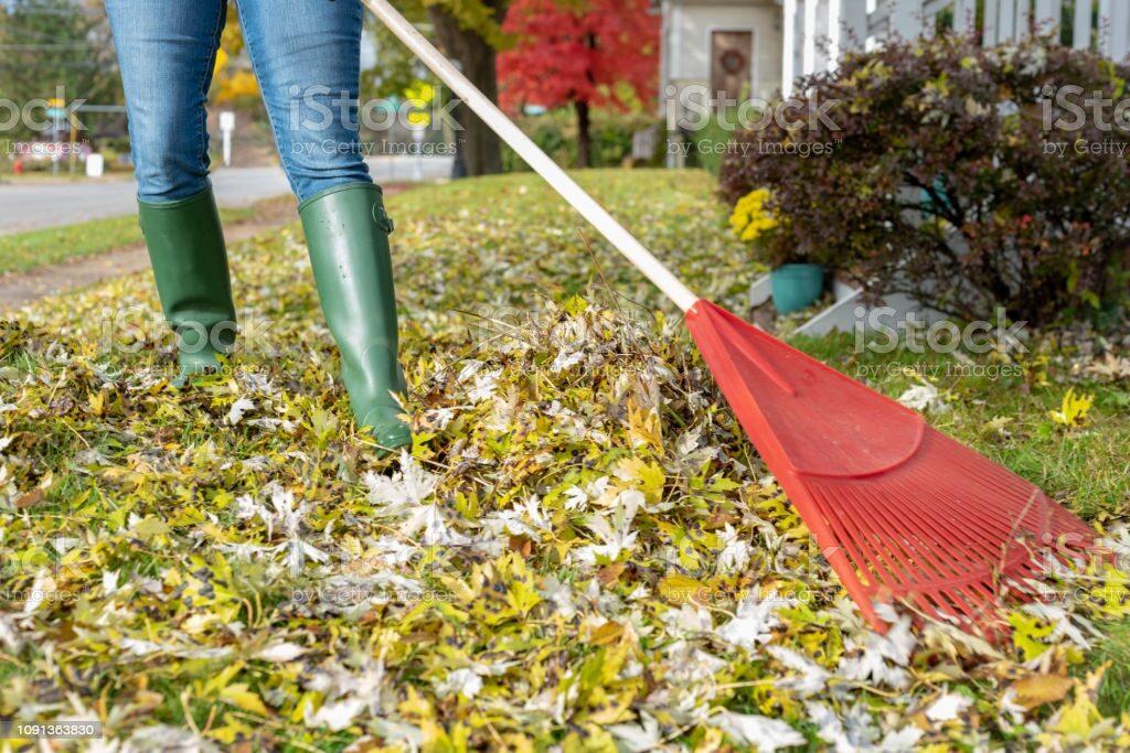 woman wearing jeans raking fallen leaves in front yard in Autumn
